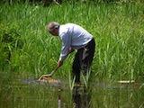 Looking for water beetles